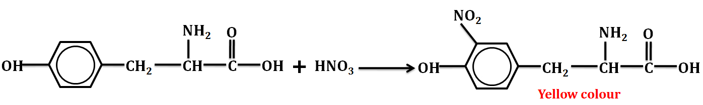 Theory & Procedure, Qualitative Analysis of Proteins Class 12 Notes | EduRev